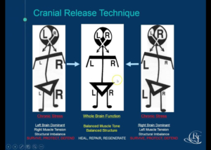 cranial-release-technique-diagram